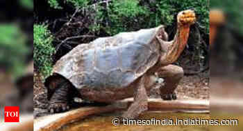 This tortoise single-handedly saved its species with its sex drive