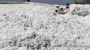 Textile minister urged to intervene in CCI cotton sale