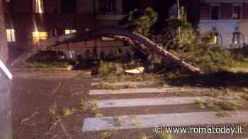 Corso Trieste: albero si spezza e colpisce vettura in transito, ferita automobilista