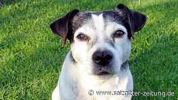 Hundehalter in Helmstedt: keine neuen Bescheide