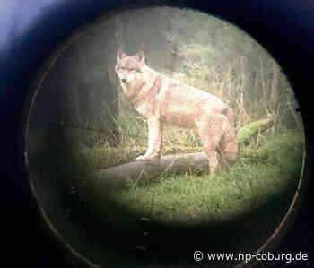 *** Landesamt bestätigt zweite Wolf-Sichtung in Kronach