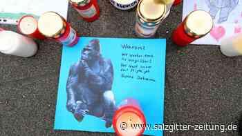 """Affenhaus: Zoo Krefeld: Polizei zu Schuss auf Gorilla """"verpflichtet"""""""