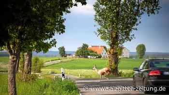 Wildunfälle: K 29 bei Knesebeck wird zur Tempo-70-Zone