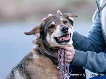 Hundebesitzer finden präparierten Wurstköder