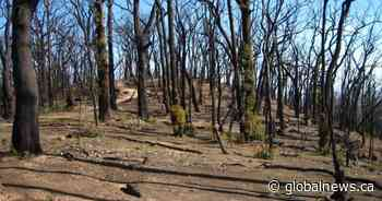 Massive wildfires are permanently altering Australia's landscape, scientists say
