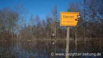 "Biber als Bauherren: ""Bibersee"" sogar auf Google Maps"