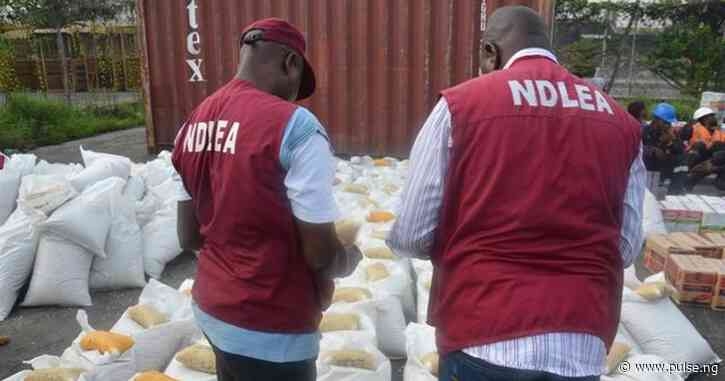 NDLEA arrests 401 suspects, seizes 281.64kg illicit drugs in Jigawa