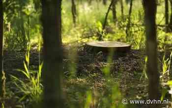 Gemeente Hoogeveen zoekt vrijwilligers voor onderhoud Millenniumbos: bos met hoge emotionele waarde