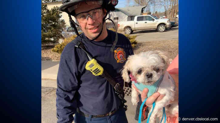 Firefighters Rescue Pup From Storm Drain In Castle Rock
