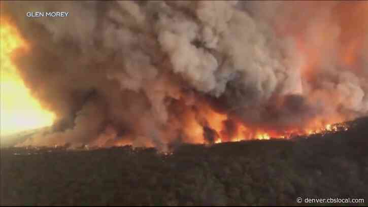 Denver Zoo Raises $55,000 For Australia Bushfire Relief Efforts