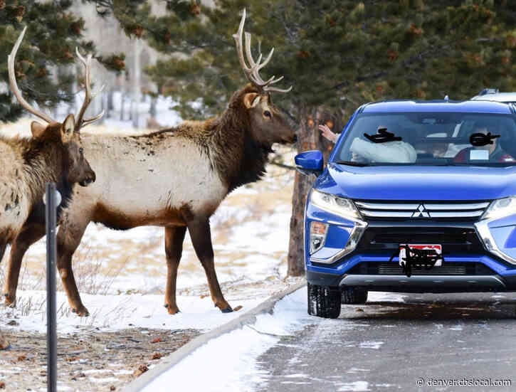 'Please Don't Do This!': Photographer Catches Woman Trying To Pet, Feed Elk