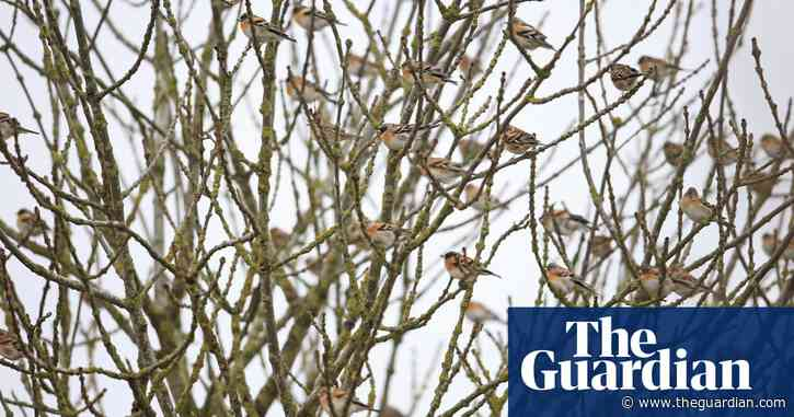 Country diary: the little bird that hides in plain sight