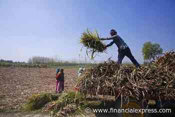 Agriculture produce trading touches Rs 91,000 crore mark on e-NAM platform