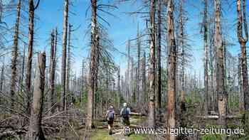 """""""Wälder sind keine Holzfabriken"""""""