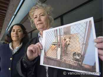 All she can do now is pray for clemency for Punky, her blue heeler that is slated to be killed Thursday