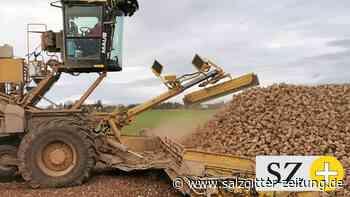 Zuckerfabrik in Schladen zieht positive Bilanz