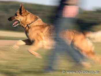 Schäferhund beißt Frau in den Oberschenkel