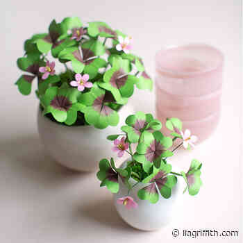 Potted Paper Clover Plants