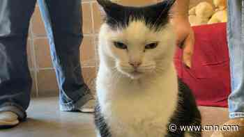 'She's just a jerk': Sassy cat given honest adoption ad