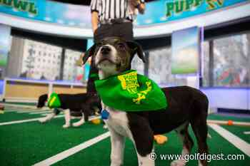 You have to be a real sick puppy to bet on these Puppy Bowl XVI props