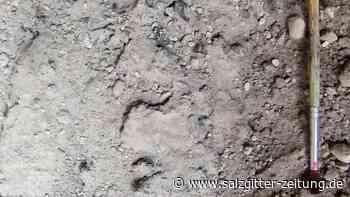 Ausbruch vor 2000 Jahren: Glasartige Strukturen in Gehirn von Vesuv-Opfer gefunden