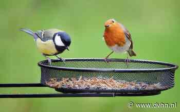 In Beeld: De jaarlijkse tuinvogelcheck