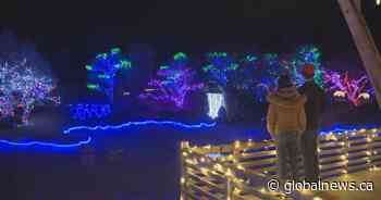 Lethbridge's Nikka Yuko Japanese Garden calls 2020 Winter Lights Festival very successful