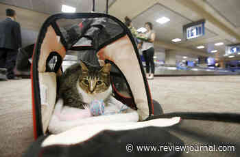 Federal officials consider tighter rules for pets on planes