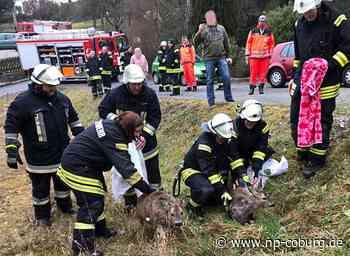 Feuerwehr rettet Rehe vor dem Ertrinken