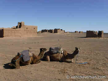 Midnight at the oasis: put your camel to bed