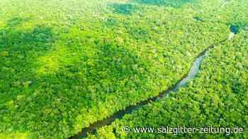 Regenwald: Verirrt am Amazonas: Wie eine Familie im Dschungel überlebte