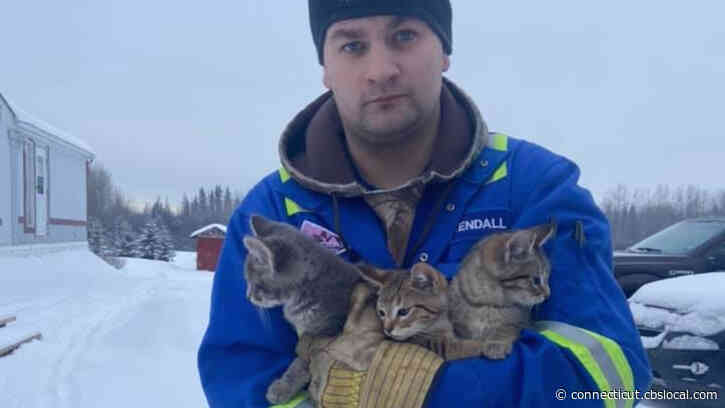 WATCH: Man Rescues Kittens Stuck In Ice By Pouring Warm Coffee On Them