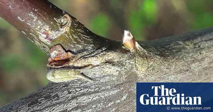 Butterflywatch: shedding new light on hibernation tactics