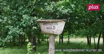 Oestrich-Winkel richtet einen Hochzeitswald ein - Wiesbadener Kurier