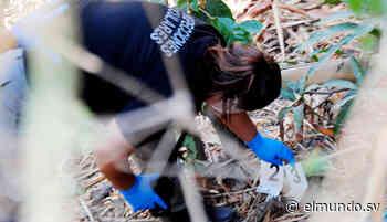 Encuentran cráneo humano en Moncagua, San Miguel - Diario El Mundo