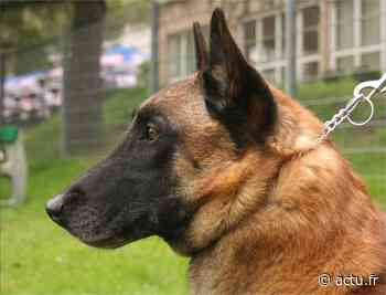 Bonneuil-sur-Marne. Le tueur d'un chien écope de six mois de prison ferme - actu.fr