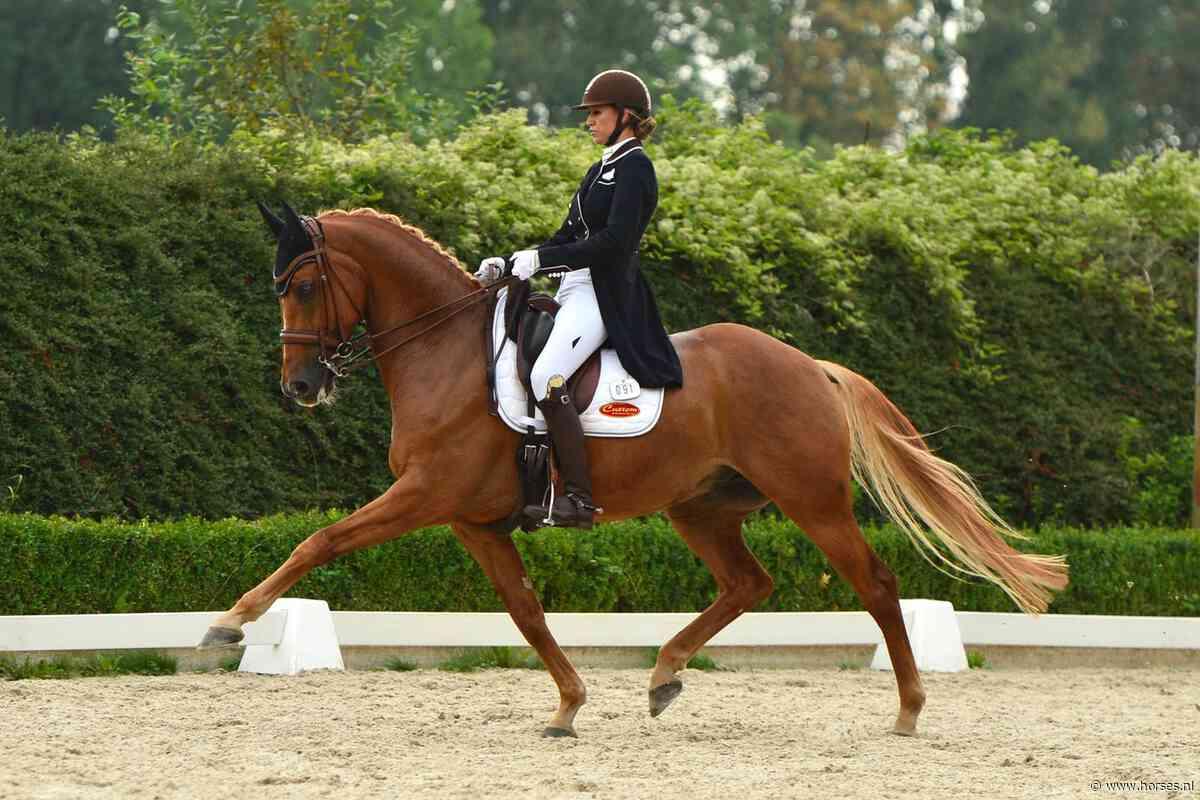 SubtopEngie Kwakkel naar dik 75%: 'Echt elke pas was van mij' - Horses.nl