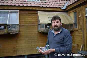 Dornburg Eldorado für Taubenzüchter - Volksstimme
