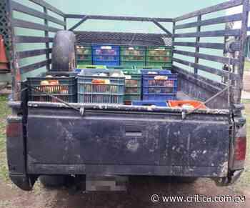 Frenan contrabando de 28 cajas de tomates en Río Sereno - Crítica