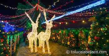 Todos los detalles de Expo Navidad Ocoyoacac 2019 - TolucalaBellaCd
