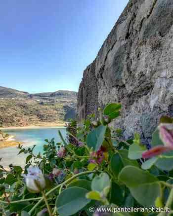 Pantelleria, Antonio Casano: tuteliamo i nostri prodotti d'eccellenza - Pantelleria Notizie - Punto a Capo Online