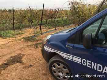 """UZES Enquête pour """"tentative de meurtre"""" cette nuit dans un camp scout avec 140 enfants - Objectif Gard"""