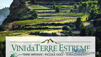 Vini da terre estreme: l'ottava edizione si svolgerà a Villa Braida - TrevisoToday