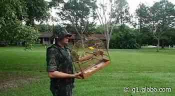 Polícia apreende 10 aves em cativeiro em casas de Charqueada; multas somam R$ 3,2 mil - G1