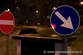Il cinghiale a passeggio nella rotonda di Cellatica - Giornale di Brescia