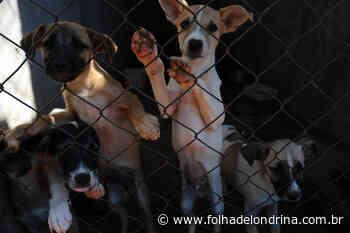 Lei contra maus-tratos de animais propõe 'nova cultura' em Londrina - Folha de Londrina