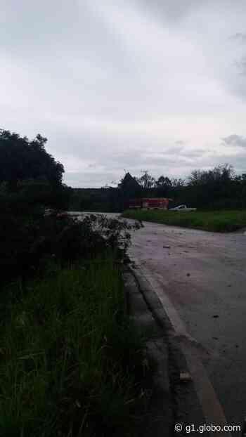 Temporal derruba árvores e assusta moradores de Capela do Alto - G1