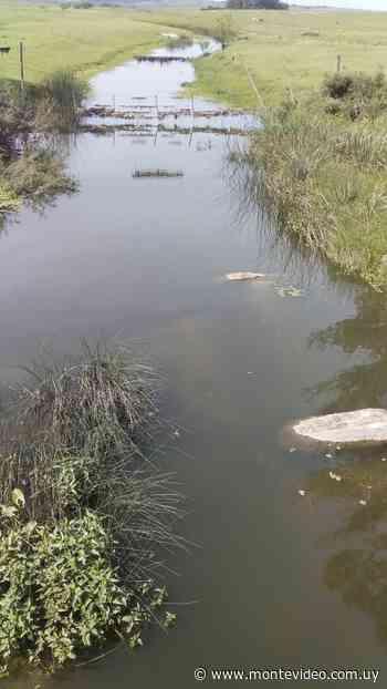 Vecinos de Guichón enviaron carta a Tabaré Vázquez por cianobacterias en arroyo Guayabos - Montevideo Portal