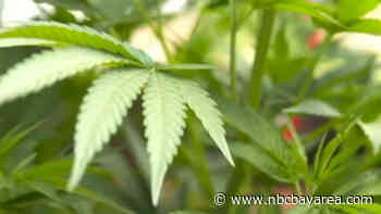 Planned Marijuana Grow Operation Sparks Concerns in Brentwood - NBC Bay Area