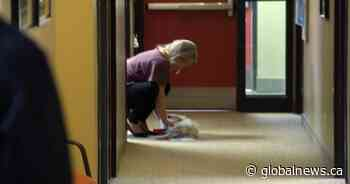 Town of Quispamsis, N.B. testing initiative to allow dogs in the workplace - Global News
